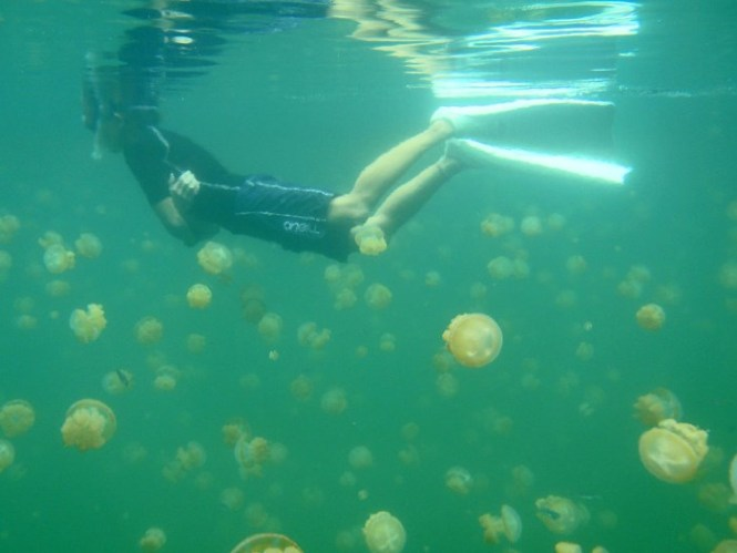 Jellyfish lake - TOP 10 VERY SPECIAL LAKES IN THE WORLD