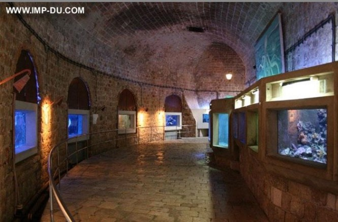 aquarium - TOP 10 TOURIST ATTRACTIONS IN DUBROVNIK FUN THINGS TO DO BEAUTIFUL THINGS TO SEE