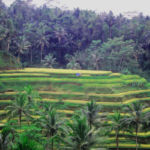 UBUD HERITAGE FOOD CULINARY TOUR - ALLEXPEDITIONS