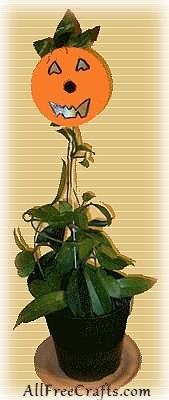 cd pumpkin