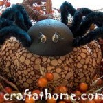 Creepy Crawlie Spiders