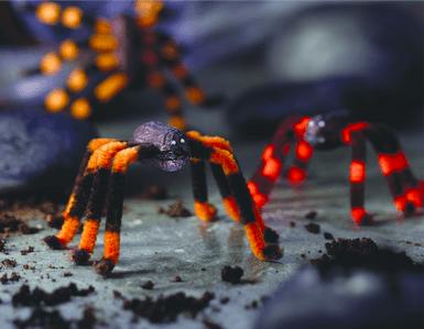 peanut spiders