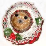 Teasel Hedgehog