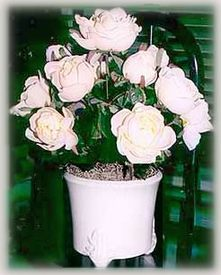 pot of blooming silk roses