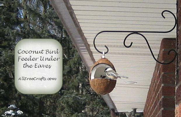 chickadee enjoying sunflower seeds from a coconut bird feeder