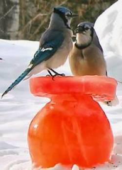 bluejays on an ice bird feeder