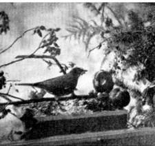 windowsill bird feeder