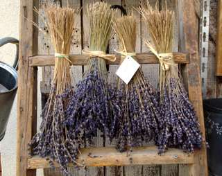 bunches of lavender hanging up to dry