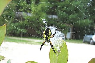 How To Preserve A Spider Web