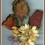 Dry Flowers with Cat Litter