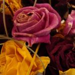 Dry Roses with Silica Gel