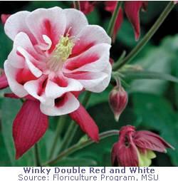 winky (13K)