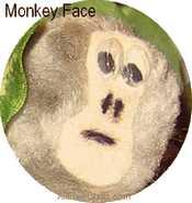 monkeyface (17K)