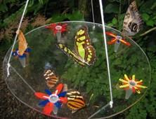 butterflyfeeder3 (17K)