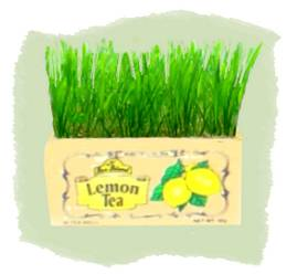 teabox cat grass