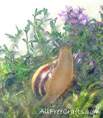 snail climbing glass