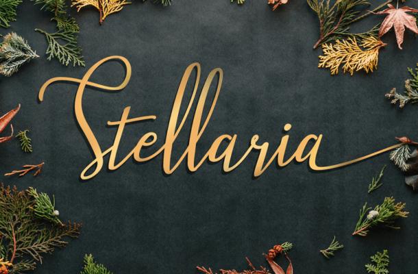 Stellaria font