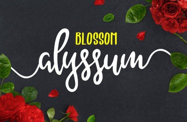Alyssum Blossom Script Font
