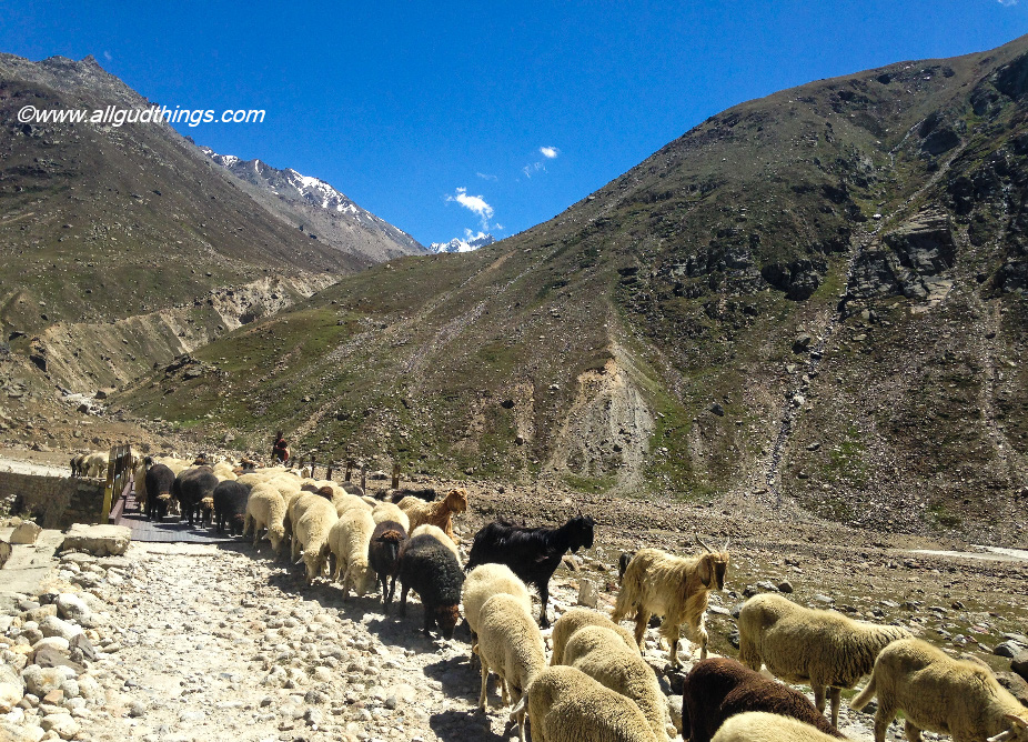 Traffic jam on the way to Spiti Valley- my travel book for year 2016! looking for more in 2017