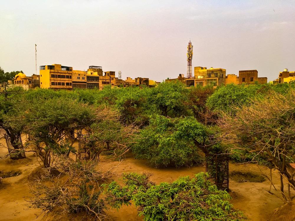 Nidhivan in Vrindavan – Mystery or Miracle