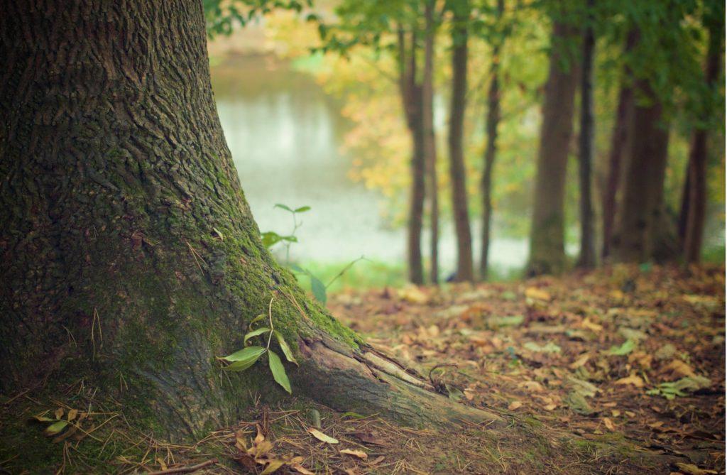 Highland Park il tree care nutrition