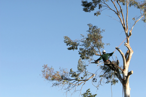 tree removal services highland park