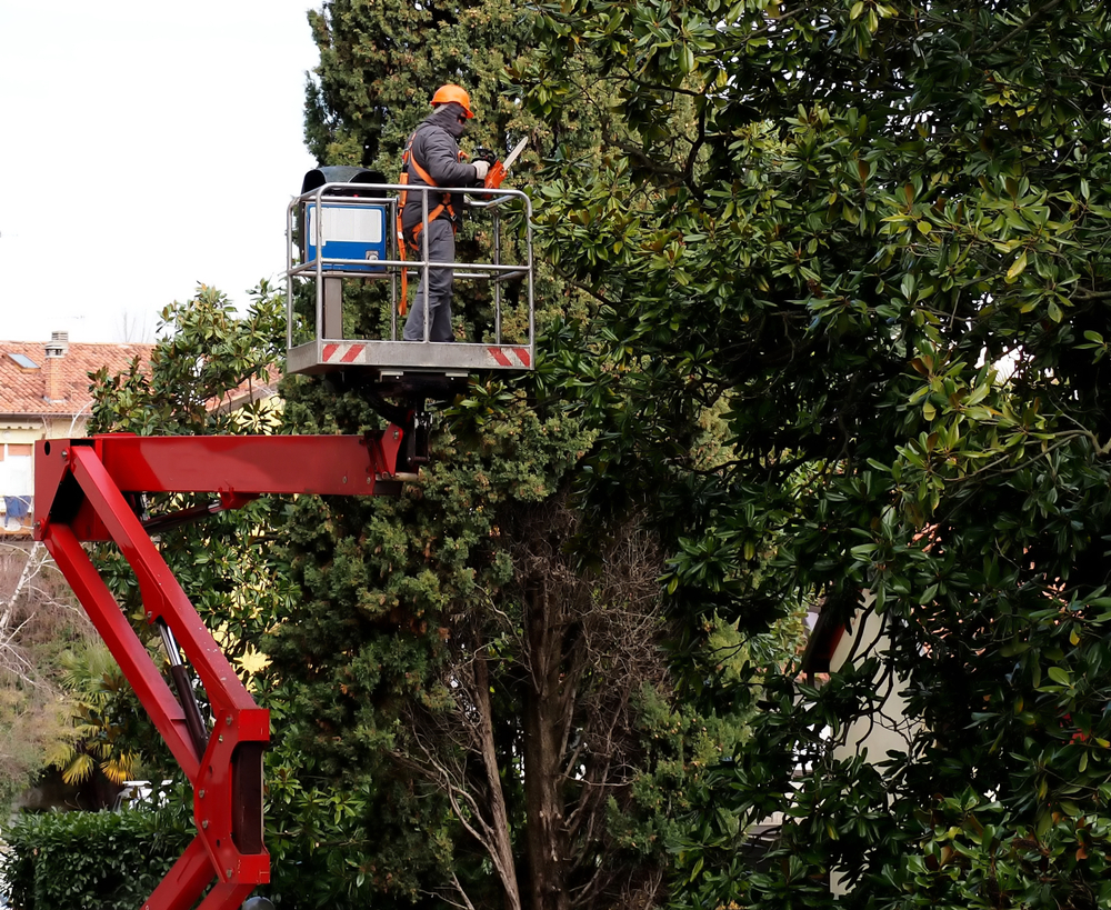 tree trimming waukegan illinois
