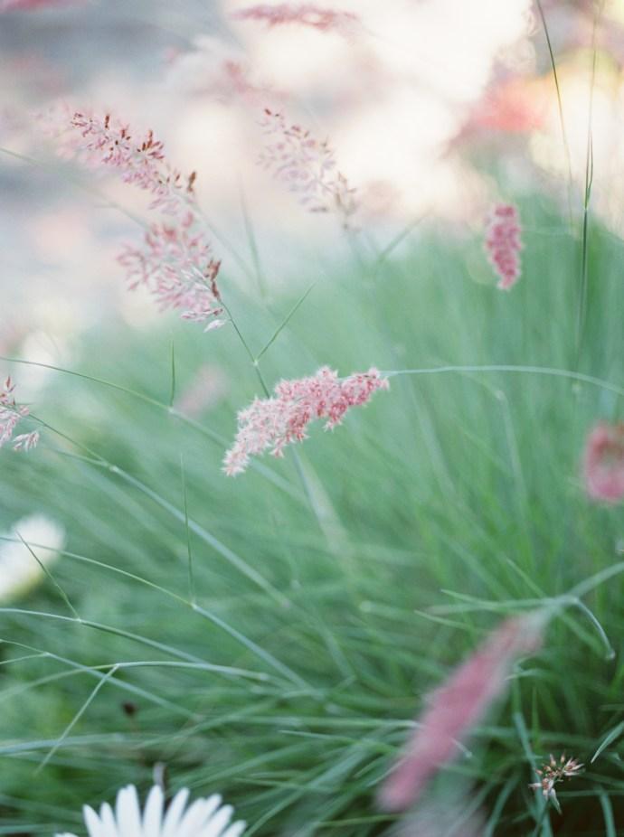 alliejenningsphotography-hamilton-wedding-photographer-fine-art-royal-botanical-gardens-wedding-68