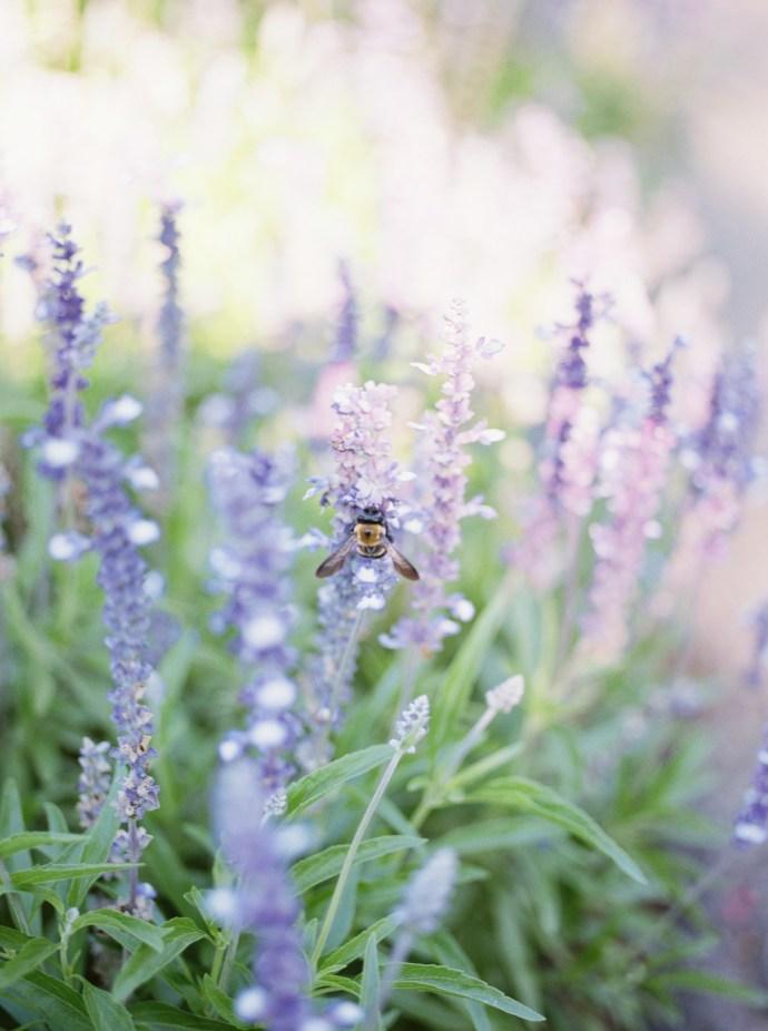 alliejenningsphotography-hamilton-wedding-photographer-fine-art-royal-botanical-gardens-wedding-69