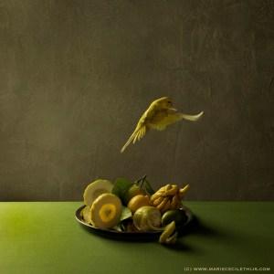Parakeet & Citrus