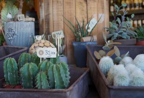 Blomsterbutikken16-12