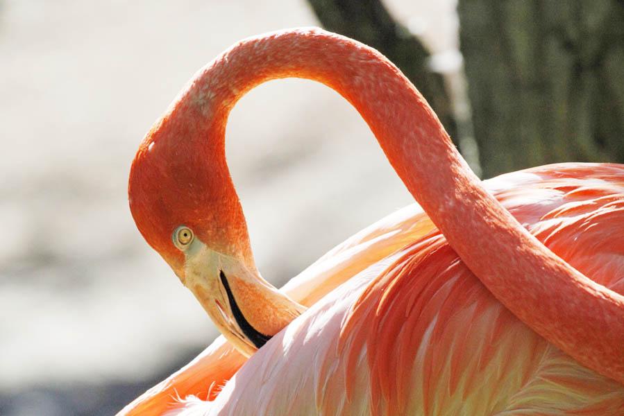 Flamingo - AllinMam.com