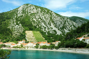 Croatia Trstenik Vineyard