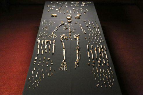 Movies Dawn of Humanity Naledi Bones