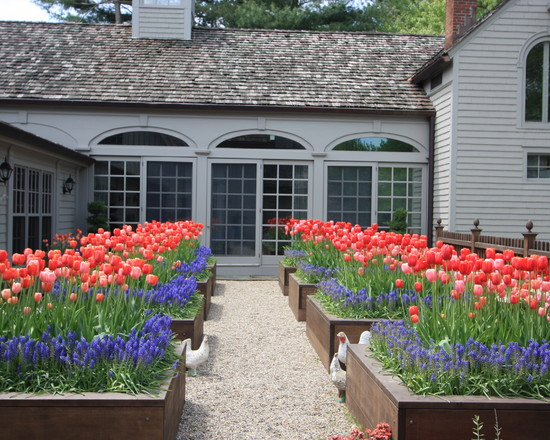 Tulips In Planting Beds (New York)