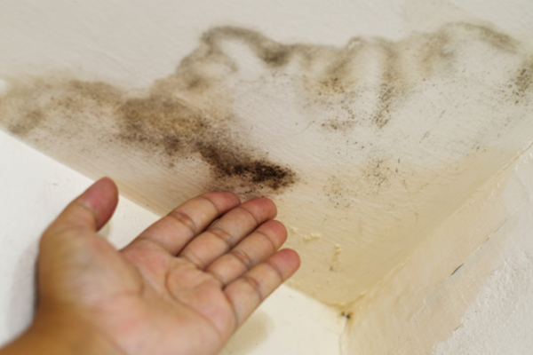 remove mold in basement after water damage