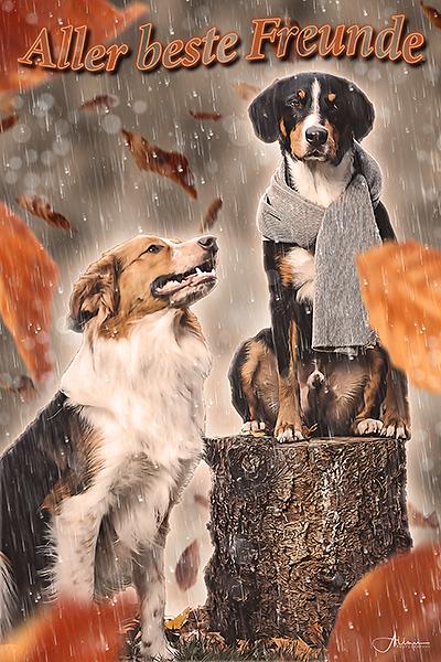 Hunde Bild im malerischen Fotodesign Artwork in Bernau bei Berlin