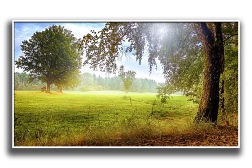 Leinwand Wandbild Lobetal Barnim Landschaftsfoto Waldlichtung Barnim