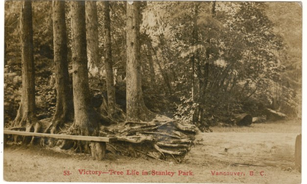 Timms, Victory–Tree Life in Stanley Park, 1909 1c Postcard