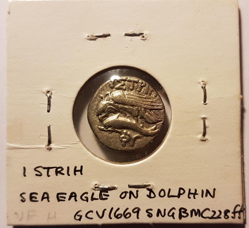 Sea eagle on Dolphin