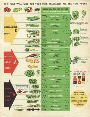 Crop Rotation  The Three Year Crop Rotation Plan