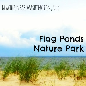 Beaches near Washington, DC: Flag Ponds Nature Park