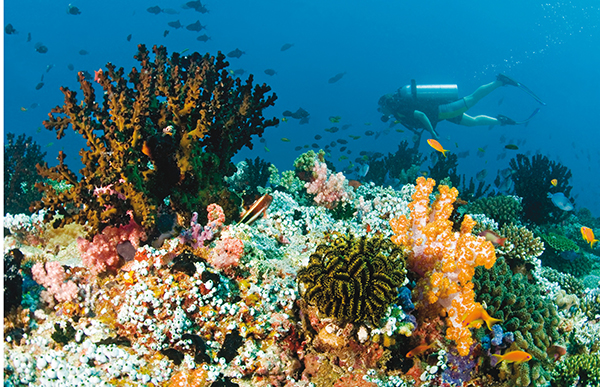 diver and colorful coral reef