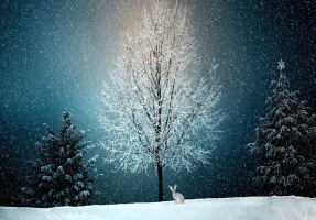 Winter Solstice Holiday