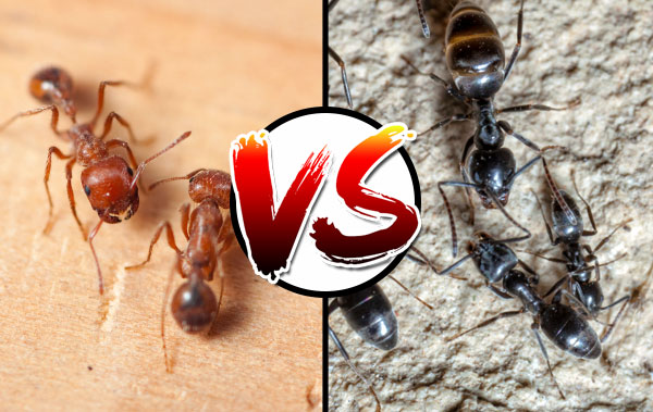 Even Though You Probably Won T Experience A Lot Of Pain Or Discomfort After An Ant Bites Human There Is Still Possibility That May Need To Seek