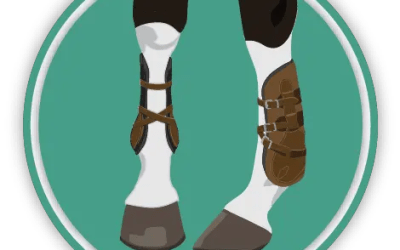Horse Boots & Wraps Quiz