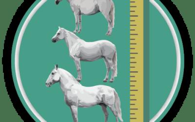 Measuring Horses Quiz