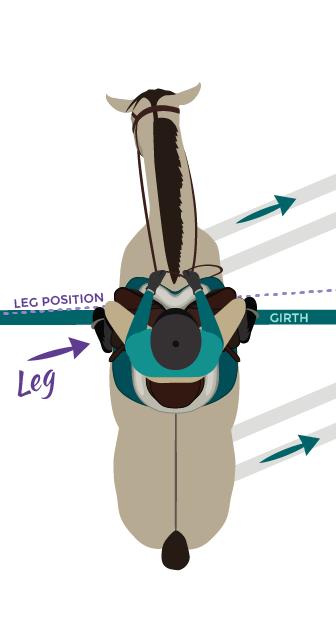 Leg at Behind Girth