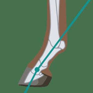 Sloping Pastern Angle