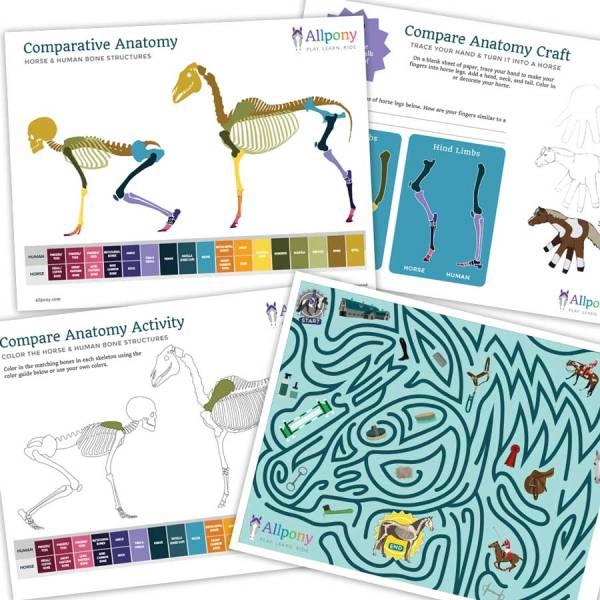 compare horse anatomy craft kids